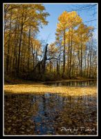 On Golden Pond by tleach0608