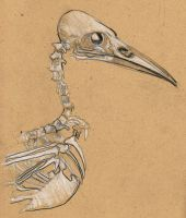 Crow Skull by Blackbirdmotel
