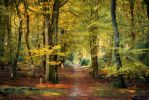 Autumn in Speuld by Northstar76