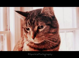 Pumpkin. by Sparkle-Photography
