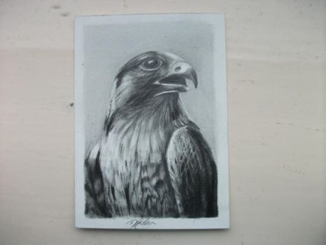 Peregrine flacon ACEO by Dom579