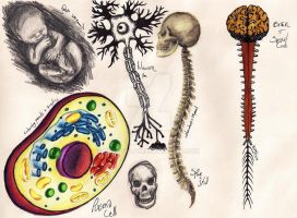 NHM Sketches: Human Biology 2 by HeavyClaw
