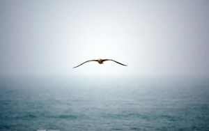 Seagull 2560x1600 by hermik