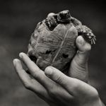 Turtle by mopteek