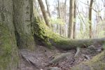 Mossy log Stock 09 by Malleni-Stock
