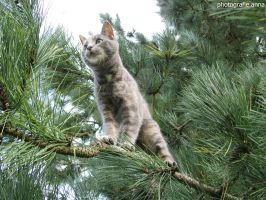 Little Cat On A Tree by GairahFotografie