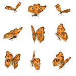 Butterfly Stock 8 by Shoofly-Stock