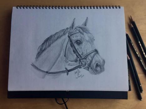 Bay Horse Graphite Drawing by imaginepride