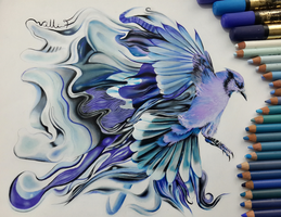 Blue Jay by plusnar