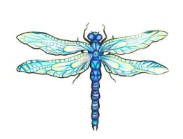 dragonfly doodle by Kittencaboodles