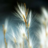 ornamental grass by SvitakovaEva