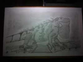 Iguana Sketch by PonyChaos13