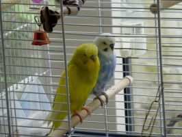 Ricky and Oscar in cage by Maanhart