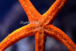 Starfish by DaughterOfTheRain