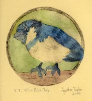 Blue Jay - Printing + Watercolor by agataylor