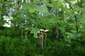 Mushrooms_2 by kulfoniasty