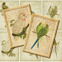 9 Printable Parrot Images, Digital Collage Sheet by DigiBugs