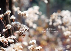 for all things there is a season by Moon-Willow