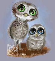 Owls by Beyka