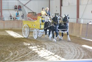 Topsfield Fair, Horse Handler Competition 8 by Miss-Tbones