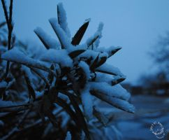 Snow covered leaves by SkyymA