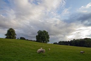 Pastoral Northumberland by parallel-pam