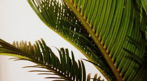 Cycad 2 by Nikee97