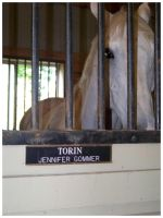 Torin by blondy0262