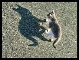 Cat Shadow by kanes