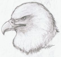 Realistic :Eagle: by Kyuubi0017