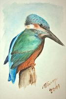 alcedo athis by mirop