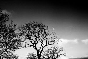Tree and the Moon by JackShelbourn
