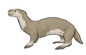 Otter Seal Colored by WSnyder