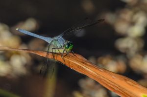 DragonFly by stockphotosource