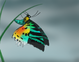 Sunset Moth by Rotommowtom