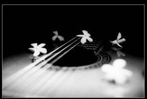 Silent Song by shahramart