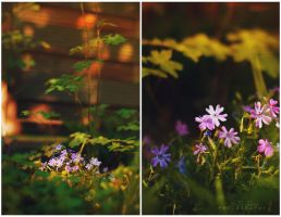 hidden in my backyard by Atreja