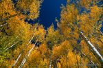 Autumn Splendor by louieschwartzberg