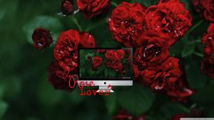 Rose Lover Wallpaper by silly-luv
