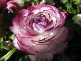 Purple Haze by crimsonrose114