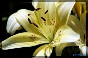 Flower 55 by Timm45