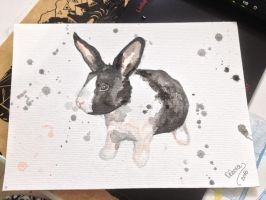 Another watercolor rabbit... by deborafischer