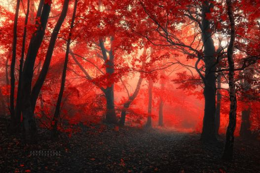 -Lover_s world- by Janek-Sedlar