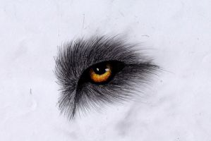 Wolf eye by PandorasWolf