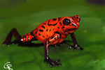 Poisonous Frog by RobertoGatto