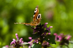 Butterfly III by ervin21