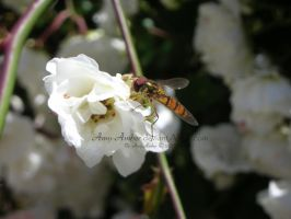 Wasp? by Amy-Amber