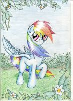Rainbows and flowers by Rameslack