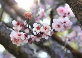Blossoms by DNA-Photographe
