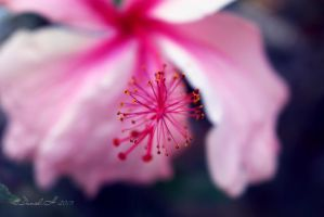 Pink Flower by DanielH24